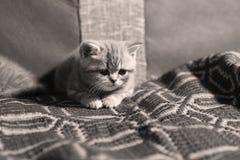 Cute newly born kitten. Cute face, newly born kitten sitting on a traditional handmade carpet royalty free stock photos