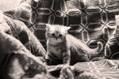 Cute newly born kitten. Cute face, newly born kitten sitting on a traditional handmade carpet stock image
