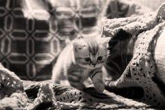 Cute newly born kitten Stock Image