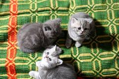 Cute newly born kittens Royalty Free Stock Photos