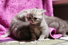 Cute newly born kittens playing Stock Photos