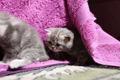 Cute newly born kittens playing Stock Images