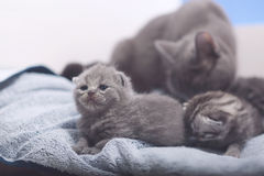 Cute newly born kittens Stock Photo