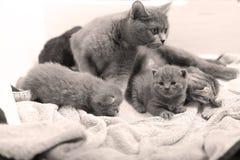 Cute newly born kittens Stock Image