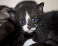 Cute not purebred kitten Stock Photo