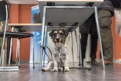 Cute obendient doggy ist sitting under a table in the midst of people stock photos
