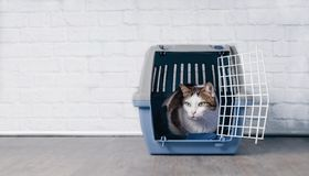 Cute old tabby cat sitting in a travel crate and look sideways. Cute old tabby cat sitting in a travel crate and look anxious  sideways Royalty Free Stock Photo