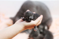 Cute one day old kitten Stock Photography