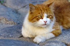 Cute orange cat Stock Photo