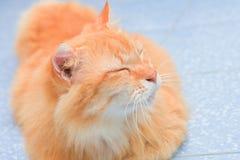Cute orange cat lying on the floor Stock Photo