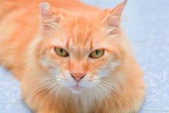 Cute orange cat lying on the floor Royalty Free Stock Photo