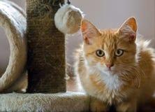 Cute orange cat Stock Images
