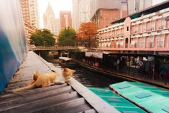 Cute Orange Cats nap in busy city bustling atmosphere on the roof of Saensab Canal Pratunam Boat Pier. Street Life in Bangkok. Thailand stock photo