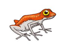 Cute Orange frog. Tropical Amphibian. Wild animal. Engraved hand drawn in old vintage sketch. Vector illustration. Orange frog. Tropical Amphibian. Wild animal Stock Photo