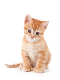 Cute orange kitten with large paws. stock photos