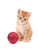 Cute orange kitten with large paws sitting next to a Christmas O Stock Photography