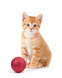 Cute orange kitten with large paws sitting next to a Christmas O Stock Photo