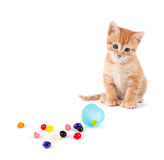 Cute orange kitten with large paws sitting next to spilled jelly Royalty Free Stock Image