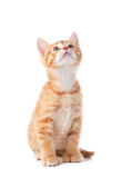 Cute Orange Kitten Looking Up on White Stock Photos