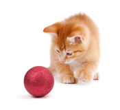 Cute Orange Kitten Playing with a Christmas Ornament on White Stock Images