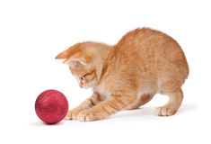 Cute Orange Kitten Playing with a Christmas Ornament on White Royalty Free Stock Images