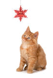 Cute Orange Kitten Playing with a Christmas Ornament on White Stock Photo