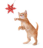 Cute Orange Kitten Playing with a Christmas Ornament on White. Cute orange kitten playing with a red Christmas snowflake ornament on a white background stock photos