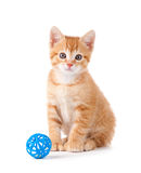 Cute Orange Kitten with a Toy on White Stock Images