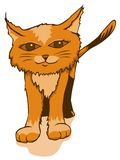Cute orange kitty Royalty Free Stock Images