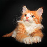 Cute orange kitty Stock Photo