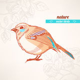 Cute orange and turquoise bird Royalty Free Stock Images