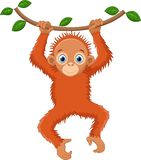 Cute orangutan cartoon hanging on tree branch vector illustration