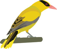 Cute oriole vector. Cute colorful oriole cartoon vector stock illustration