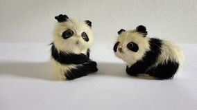 Cute ornamental playful miniature pandas. Two miniature pandas sitting in front of a white background Royalty Free Stock Images