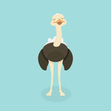 Cute Ostrich in flat style isolated. Stock Photography