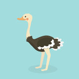 Cute Ostrich in flat style isolated. Royalty Free Stock Photography
