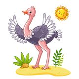 Cute ostrich stands on the meadow. Royalty Free Stock Photo