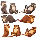 Cute otters in different actions Royalty Free Stock Photography