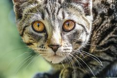 Cute Outdoor house cat Stock Images
