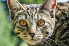 Cute Outdoor house cat Stock Photography