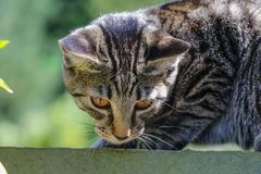 Cute Outdoor house cat Royalty Free Stock Image
