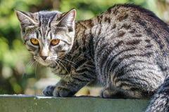 Cute Outdoor house cat Stock Photos