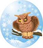 Cute owl. On branch in winter oval frame with snowflakes Stock Image