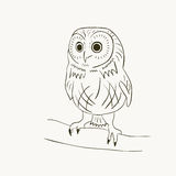 Cute owl. Little cute owl sitting on the branch Royalty Free Stock Photo