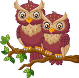 Cute owl on the branch Royalty Free Stock Photography
