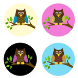 Cute owl on a branch set. Owl on a branch set - colorful Stock Photography