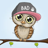 Cute Owl. Cute cartoon owl in a cap is sitting on a branch Stock Image