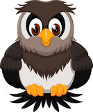 Cute owl cartoon. Of illustration Royalty Free Stock Image