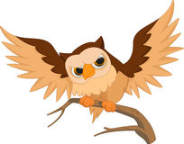 Cute owl cartoon Stock Images