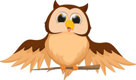 Cute owl cartoon Royalty Free Stock Photography